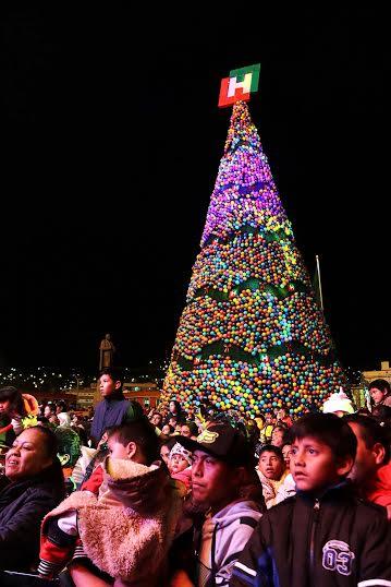 Se iluminó el árbol monumental